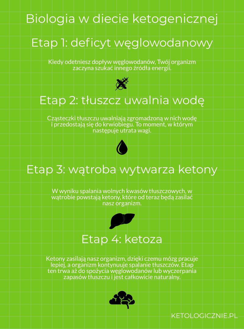 infografika biologia w diecie ketogenicznej